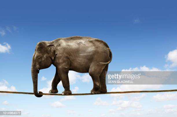 elephant on tightrope - indian elephant stock pictures, royalty-free photos & images