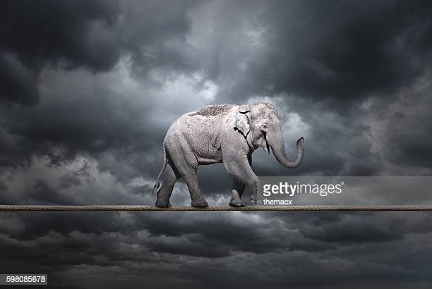 Elephant on tightrope