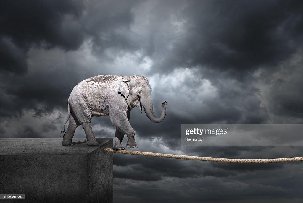 Elephant on tightrope : Stock Photo