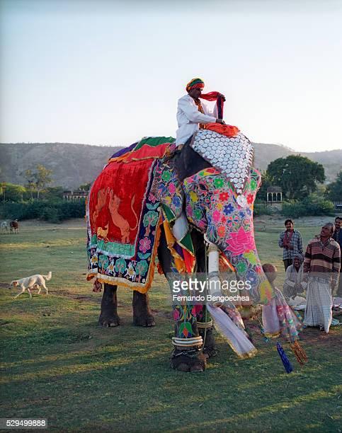 Elephant Painters Admiring Their Work