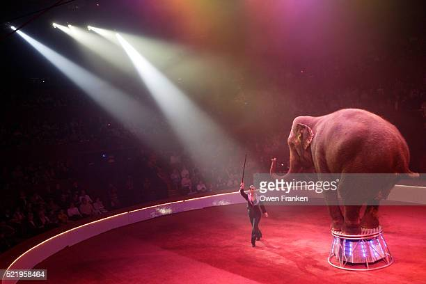 Elephant Performing in Circus
