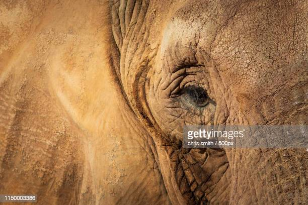 elephant - animal welfare stock photos and pictures
