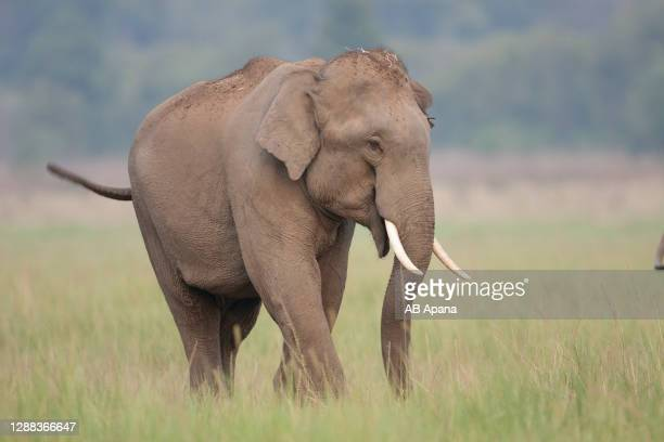elephant - animals in the wild stock pictures, royalty-free photos & images