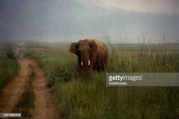 Rahul Sharma/ INDIAPICTURE/Universal Images Group via Getty Images)