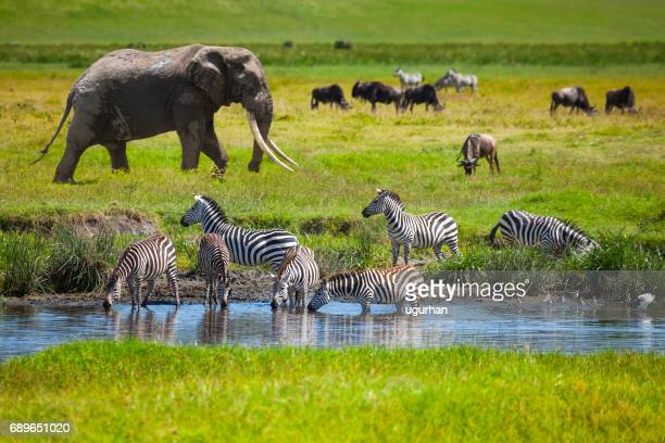 Serengeti National Park >> 60 Top Serengeti National Park Pictures Photos Images Getty Images
