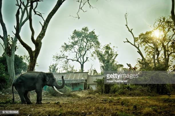 elephant - nathaniel woods stock pictures, royalty-free photos & images