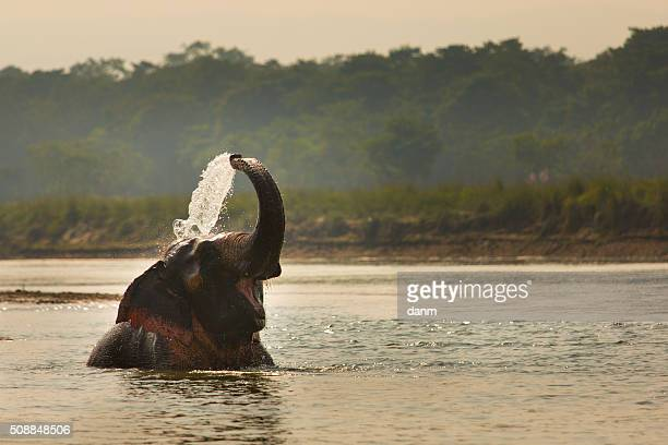 Elephant playing with water in a river, Chitwan Nationl Park, Nepal