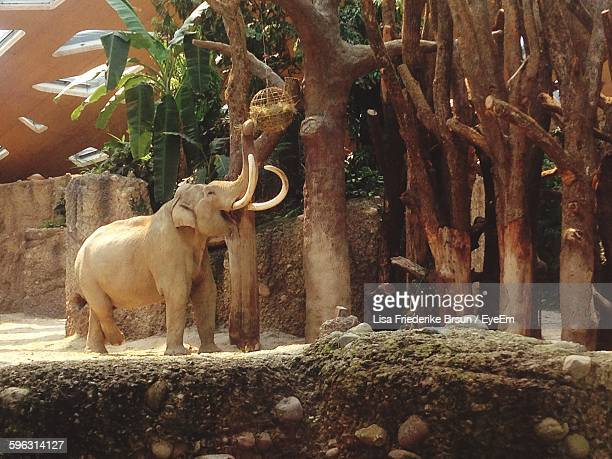 elephant reaching to nest - zoology stock pictures, royalty-free photos & images