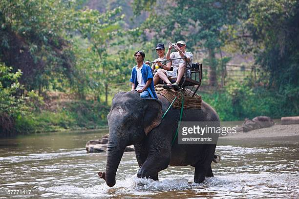 elephant ride. - riding stock photos and pictures
