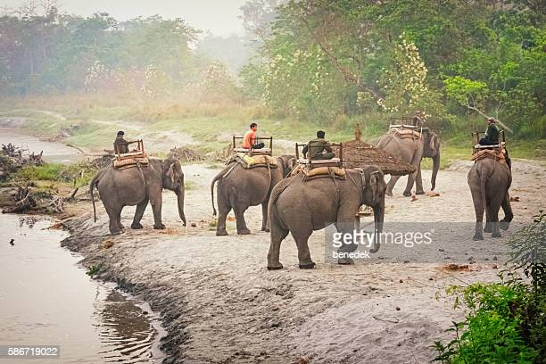 Elephant Ride Safari Tour at Chitwan National Park in Nepal