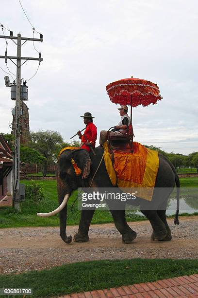 elephant rider in ayutthaya - gwengoat stock pictures, royalty-free photos & images