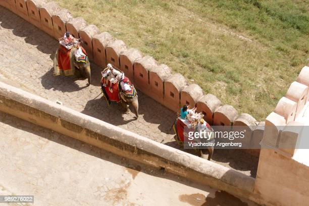 Elephant rides along the outer walls of Amber Fort in Jaipur, Rajasthan, India