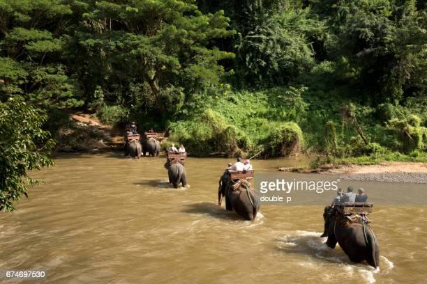 Elephant river crossing