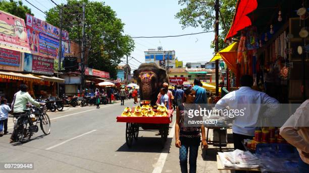 elephant roaming on road - street view near mahakal temple in ujjain, india - indore stock photos and pictures