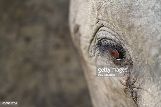 elephant, sabi sabi reserve, south africa - mpumalanga province stock pictures, royalty-free photos & images