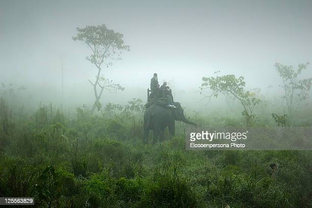 elephant safari in chitwan - chitwan stock pictures, royalty-free photos & images