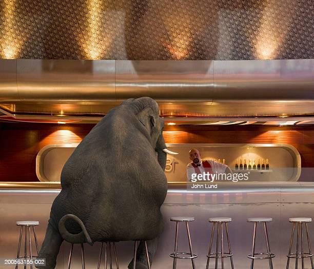 Elephant sitting at bar