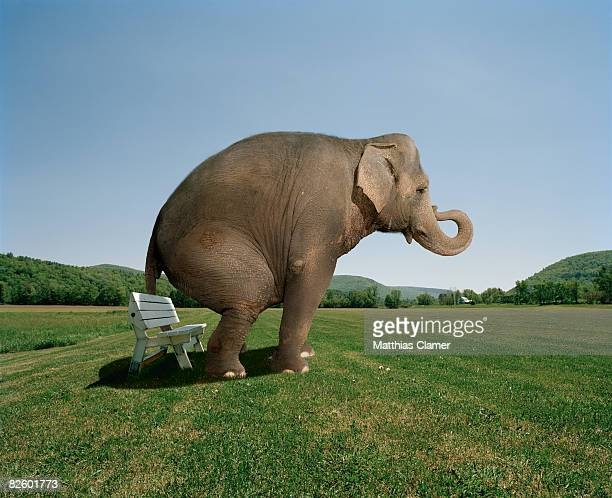 elephant sitting on a park bench