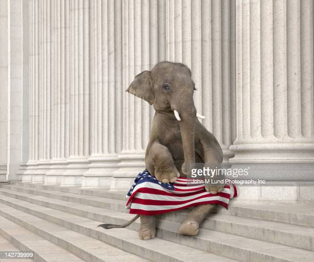elephant sitting steps with american flag - us republican party stock pictures, royalty-free photos & images