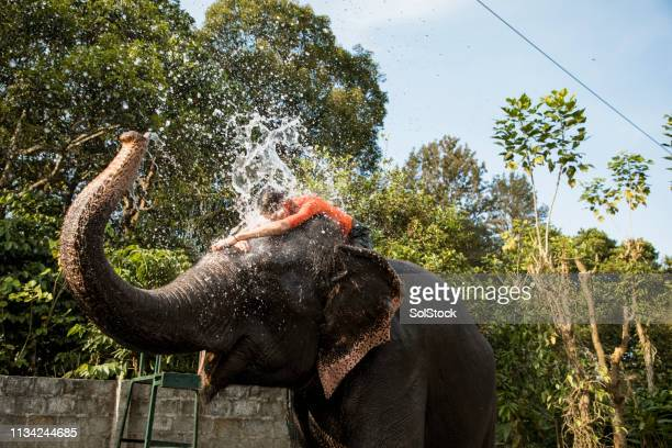 elephant spraying tourist with water - kerala elephants stock pictures, royalty-free photos & images
