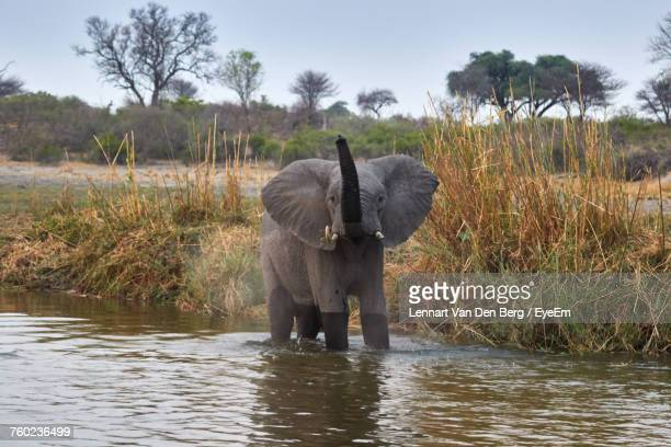 Elephant Standing At Riverbank Against Sky