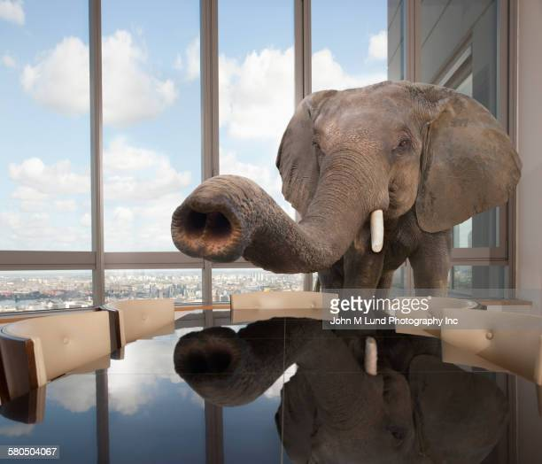 elephant standing in conference room in office - john lund stock pictures, royalty-free photos & images