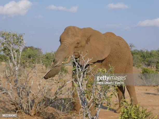 Elephant Standing On Field Against Sky