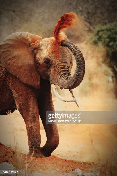 Elephant Standing Outdoors