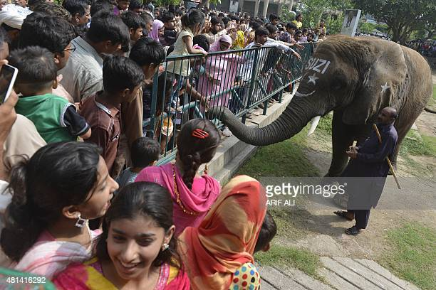 Elephant Suzi greets with visitors at the Lahore Zoo on July 20 during the Eid alFitr holidays marking the end of the Muslim fasting month of Ramadan...