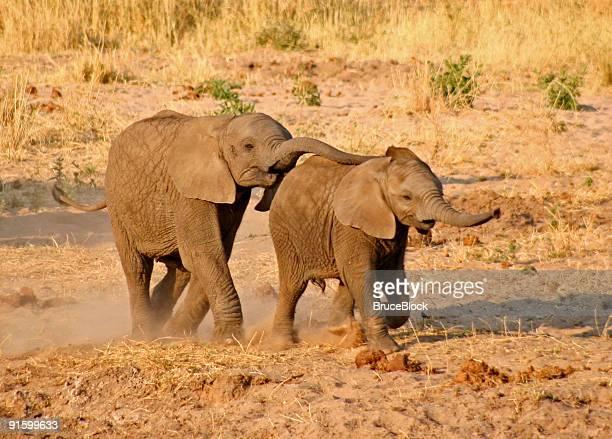Elephant Tag