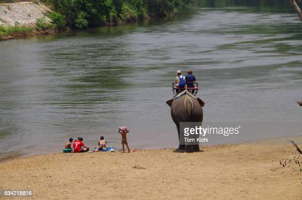 elephant trekking in north thailand - big bums stock photos and pictures