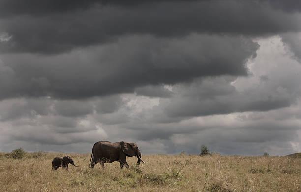 Elephant Under Cloudy Sky Wall Art