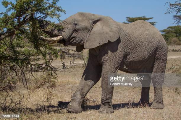 Elephant Victim Of Poaching