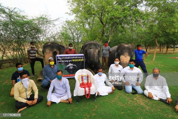 Elephant Village Development Society President Ballu Khan along with elephants and mahouts pay tribute to a wild pregnant elephant who recently...