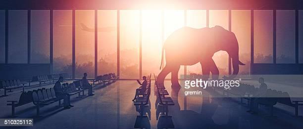 Éléphant marchant à l'aéroport