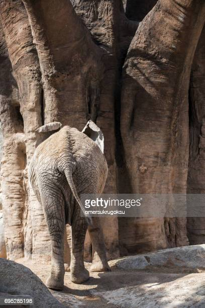 elephant walking away - big bums stock photos and pictures