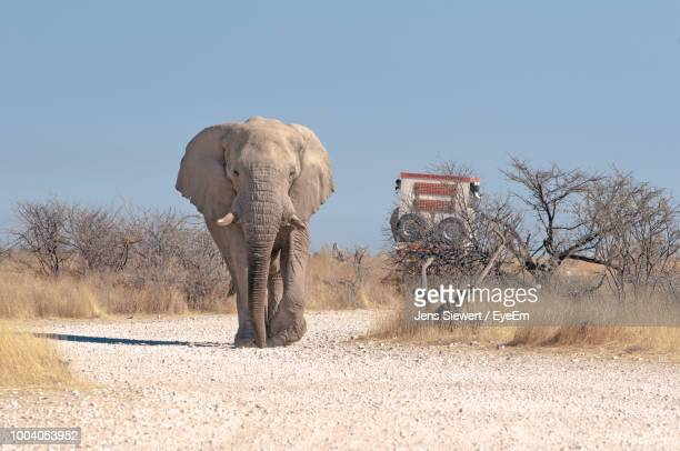 elephant walking on footpath against clear sky - jens siewert stock-fotos und bilder