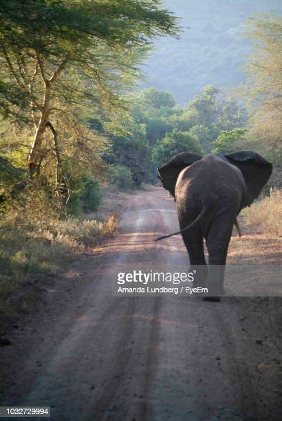 Elephant Walking On Road Amidst Trees