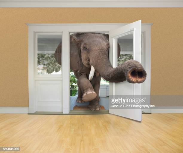 Elephant walking through doorway