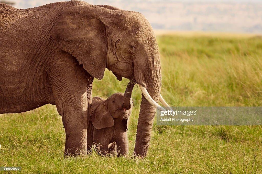 Elephant with baby, Masai Mara, Kenya : Stock-Foto