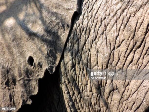 Elephant with Gauge