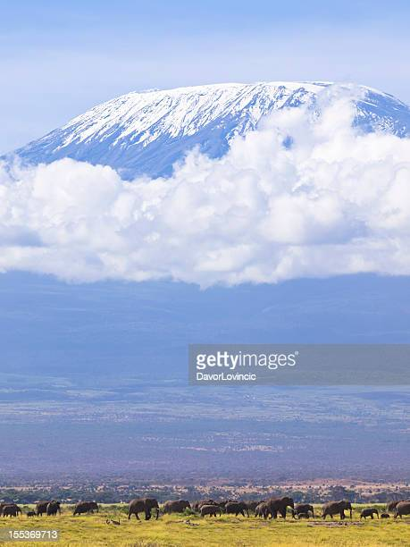 Éléphants et le Kilimandjaro