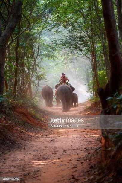 elephants and mahout - zuidoost azië stockfoto's en -beelden