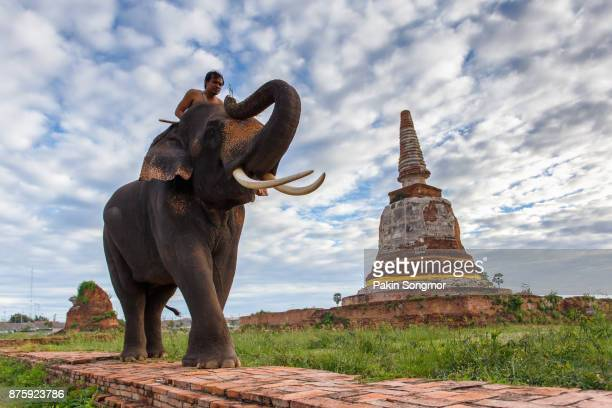 Elephants and old stupa at ayutthaya province in Thailand