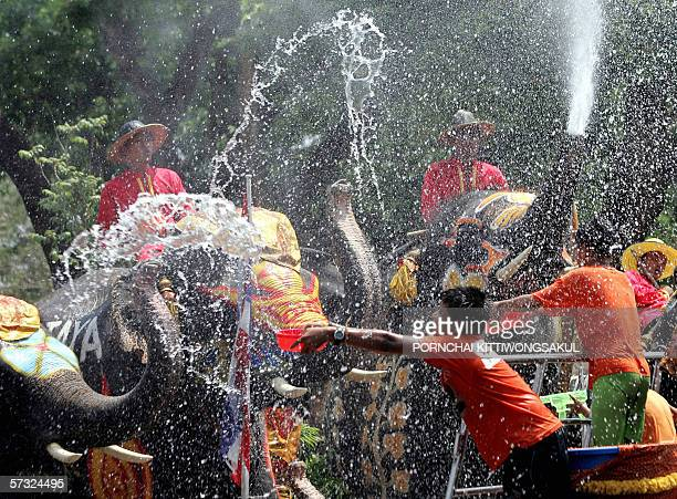 Elephants and their handlers enjoy spraying water on bystanders during the Songkran festival in Ayuttaya province 12 April 2006 The Songkran festival...