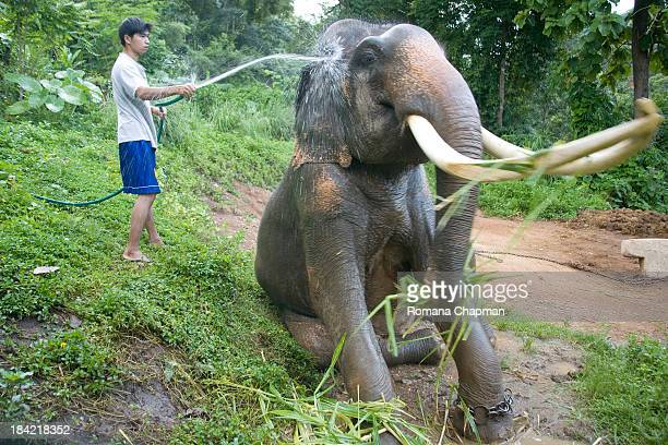 CONTENT] elephants and their keepers mahouts grow extremely close during their lifetimes These days it is difficult to find a mahout who will remain...