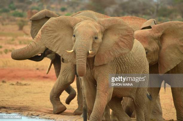 Elephants are pictured at a water reservoir at the Voi Wildlife Lodge in Tsavo East on August 22 2018