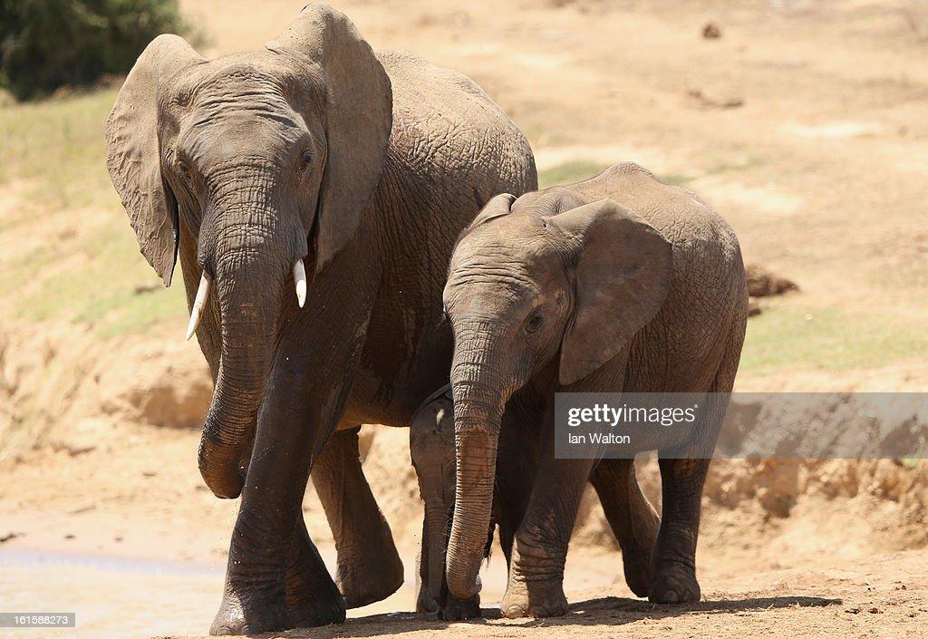 Addo National Park : ニュース写真