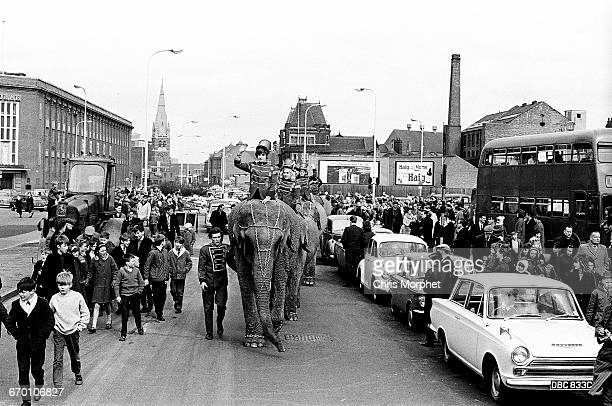 Elephants are ridden in parade through the streets of Leicester United Kingdom to advertise Billy Smart's Circus circa mid 1960s