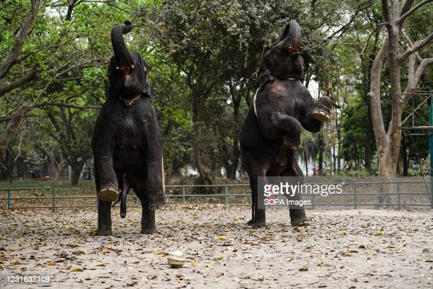 Elephants are seen in an enclosure in Dhaka zoo. Bangladesh National Zoo is located in the Mirpur section of Dhaka, the capital city of Bangladesh....